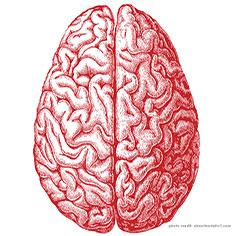 video & brain
